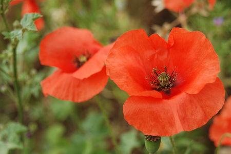 Notre_Dame_d_Aubune___fleurs_006
