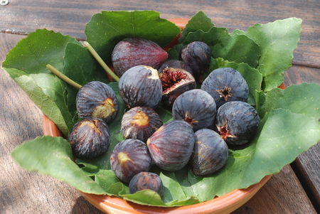 Figues_001