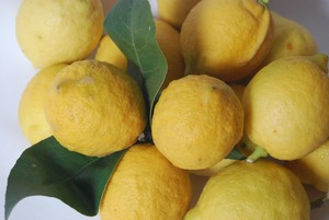 citrons___oranges_am_res_001