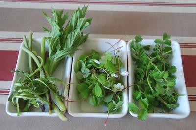 Salade de plantes sauvages comestibles cuisine plurielle - Cuisine plantes sauvages comestibles ...
