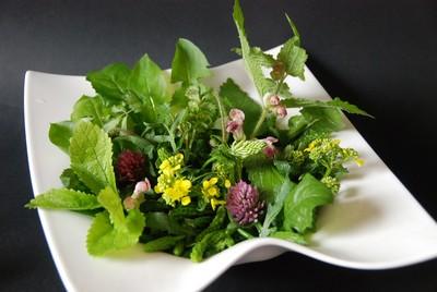 Salade plantes sauvages mai 2014 (1)