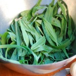 plantain-lanceole