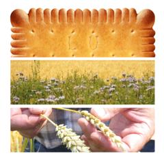 Cuisine plurielle des recettes voyages art culinaire for Billet salon de l agriculture